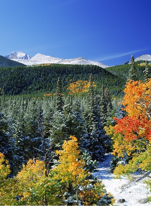 Aspen and pine trees in in autumn at Rocky Mountain National Park in Colorado