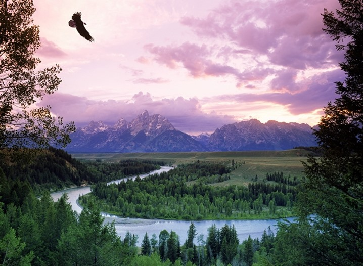Bald headed eagle flying above Oxbow on Snake River with Grand Tetons at sunrise
