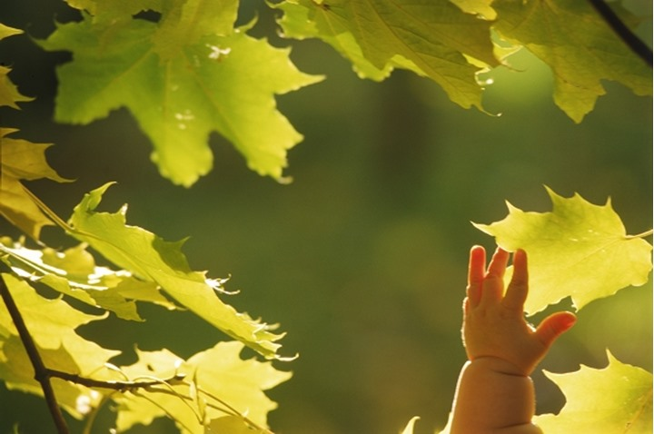 Hand of baby reaching for leaf in autumn sunlight
