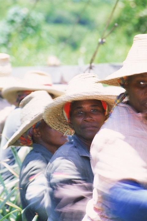 Caribbean field workers riding in truck on Santa Lucia Island