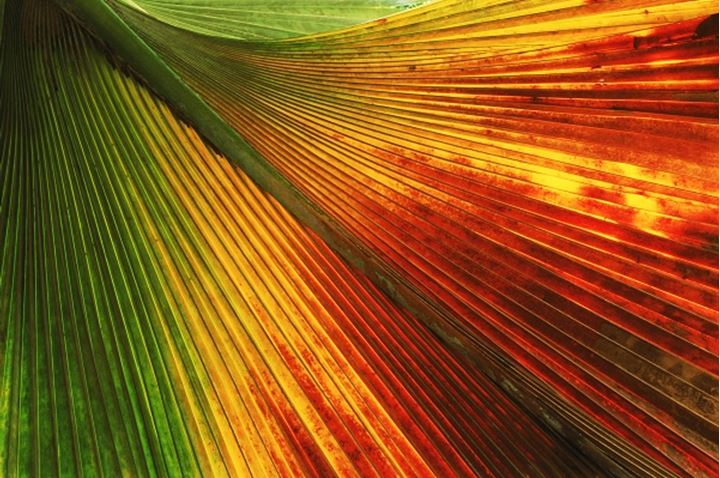 Colorful palm frond in rainforest on Praslin Island in Seychelles
