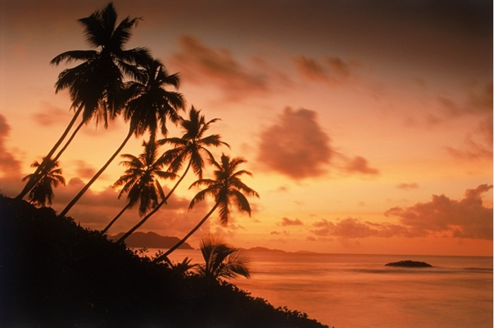Palm trees on La Digue Island silhouetted at sunset with Praslin beyond