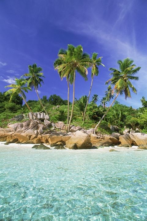 Palm trees and granite rock formations on La Digue Island Seychelles