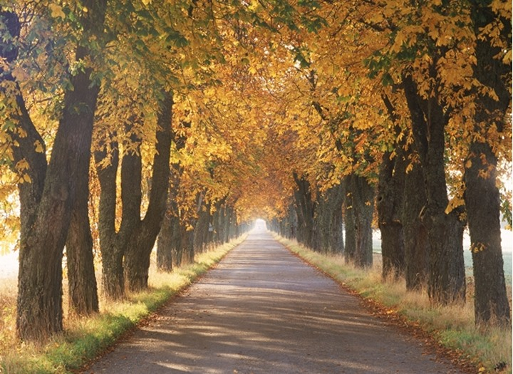 Autumn canopy of colors on tree-lined country road in Sweden