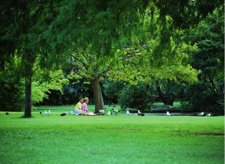 Couple sharing picnic with birds at Royal Botanic Gardens in Sydney  New South Wales,  Australia