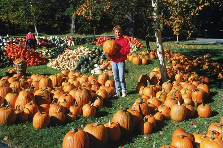 Young woman holding pumpkin on pumpkin and gourd farm in California