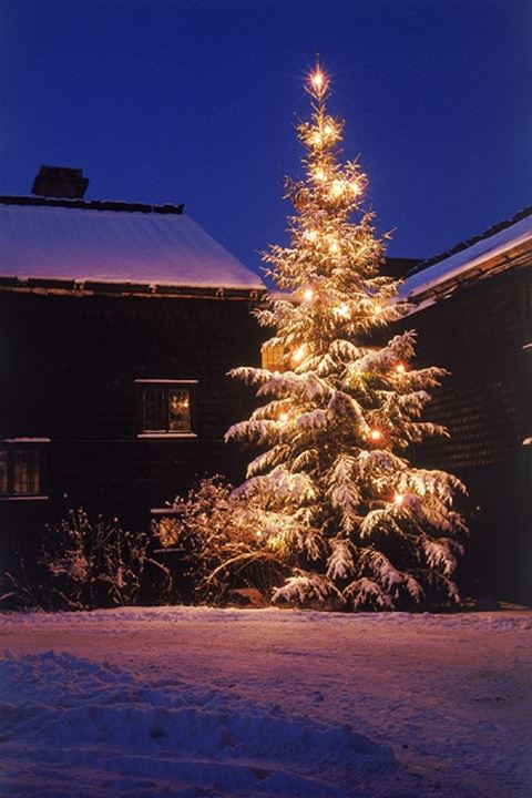 Outdoor Christmas tree laden with fresh fallen snow glowing at night