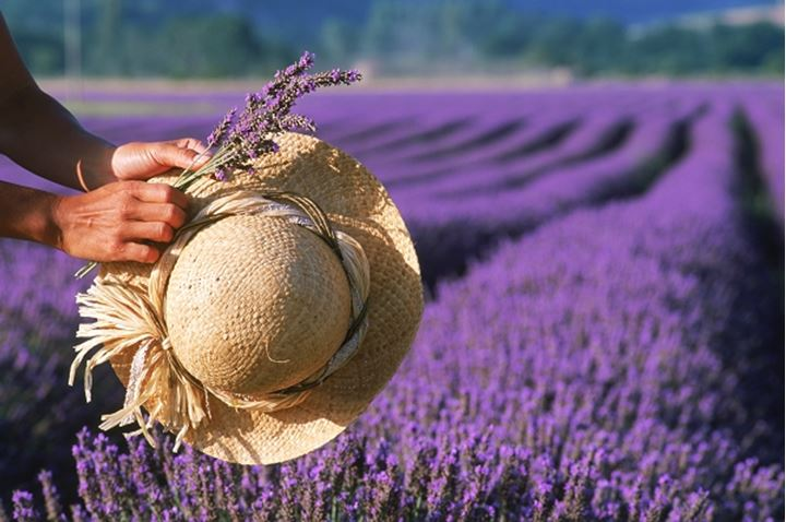 Woman with hat in field of lavender in Provence