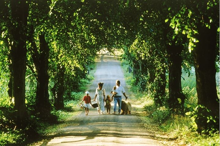 Family of five with dog on tree lined country road in Sweden