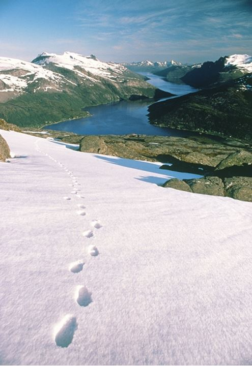 Footprints in the snow on a mountain, overlooking Morsvikbotn Fjord in Northern Norway.