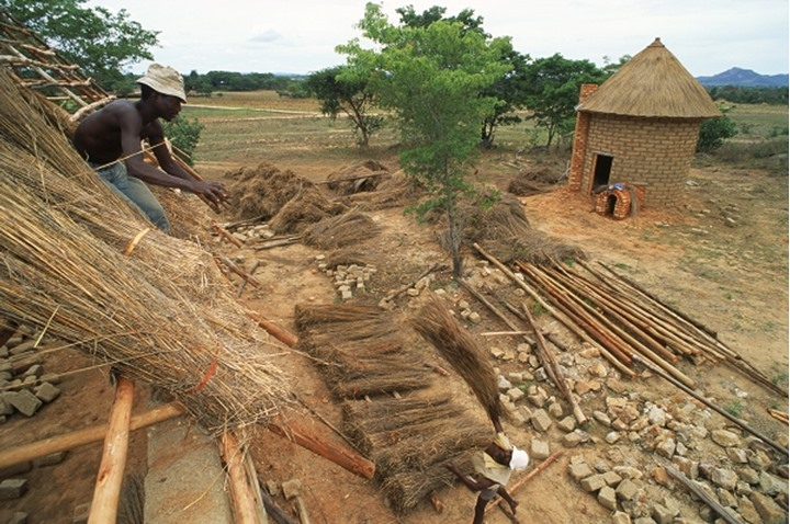 Africans laying grass thatched roofing on their rural huts in Zimbabwe