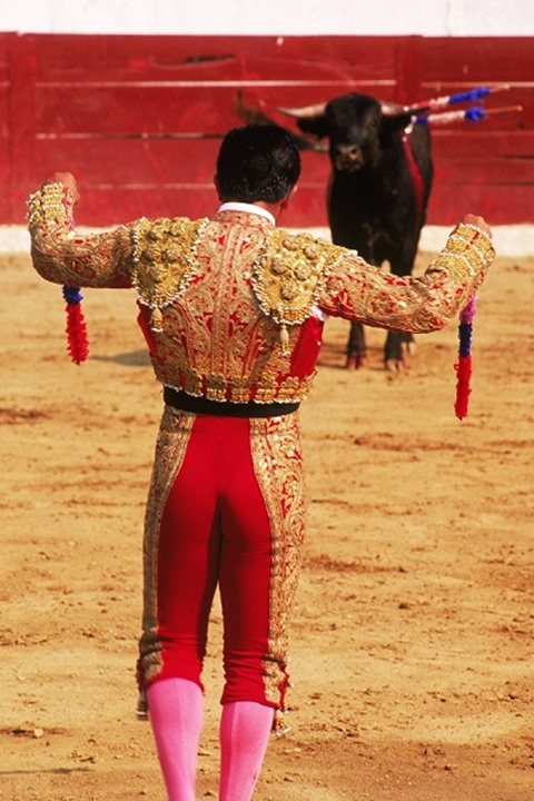 Banderillero set to place barbed wooden decorated sticks into bull in preperation for the Matador