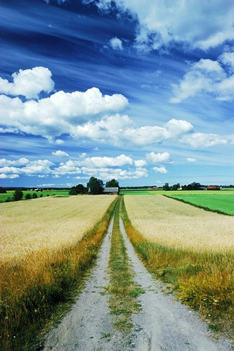 Country road through wheat fields of Vestergotland in Sweden