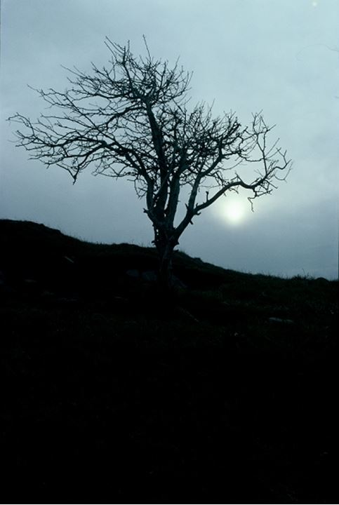 Low angle view of a silhouetted bare tree at dusk