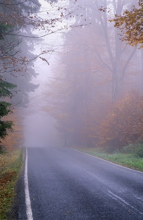 CZECH REPUBLIC SOUTHERN BOHEMIA MISTY ROAD