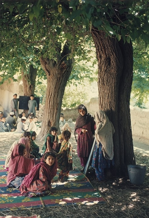 School children studying under the shade of trees