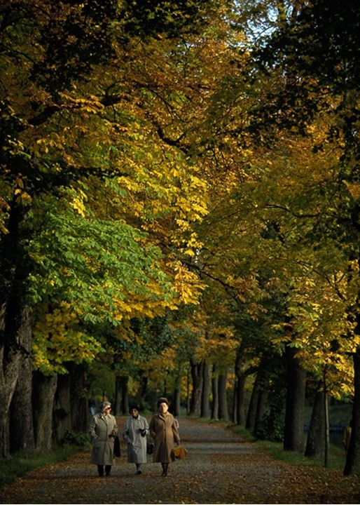 Walking in park, autumn colored leafs, Stockholm