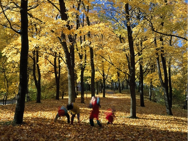 Children playing in forest -throwing autumn leafs, Stockholm