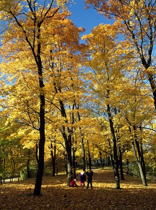 Children playing in forest in autumn, Stockholm