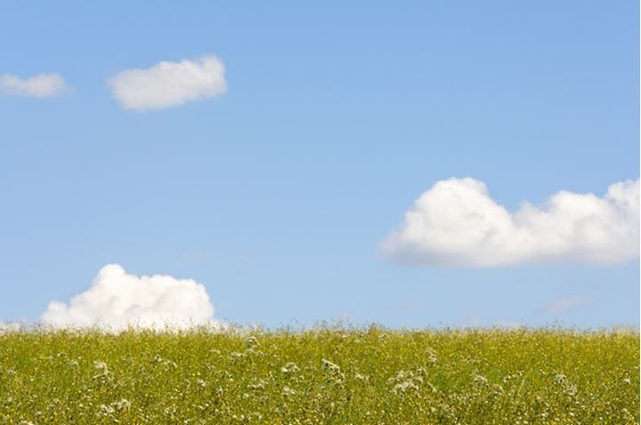 CONCEPTS MEADOW BLUE SKY WHITE CLOUDS