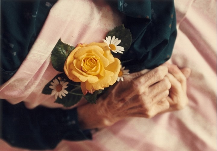 Overhead view of wrinkled hands holding yellow rose