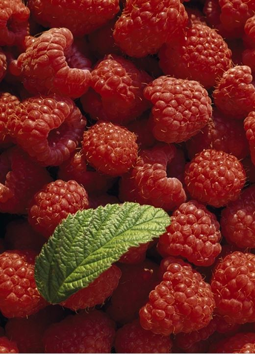 A pile of raspberries with one leaf lying on it