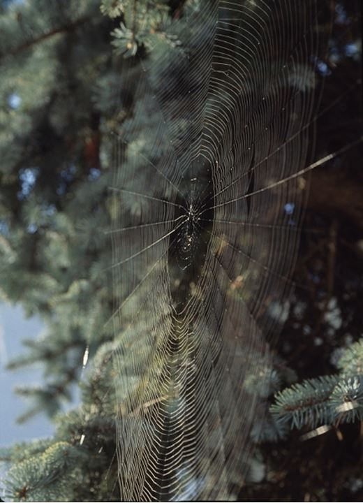 Close up of a spider web