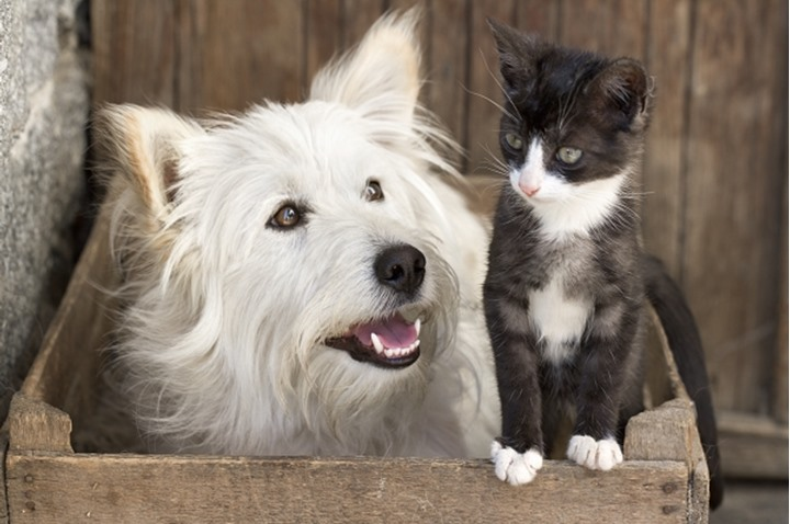 ANIMAL FRIENDS CAT AND DOG