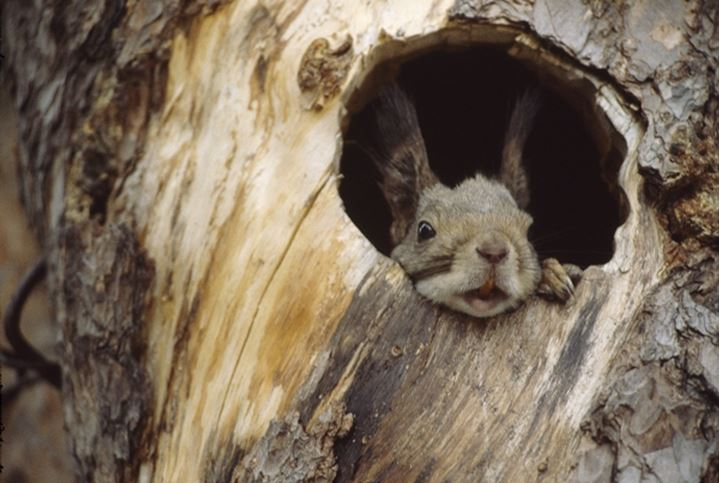 Rabbit's face looking out of hollow trunk