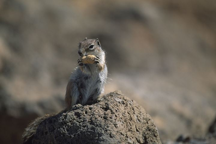 Close up of a squirrel eating on the rock