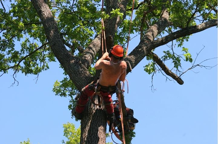 Low angle view of a climber hanging on tree with rope