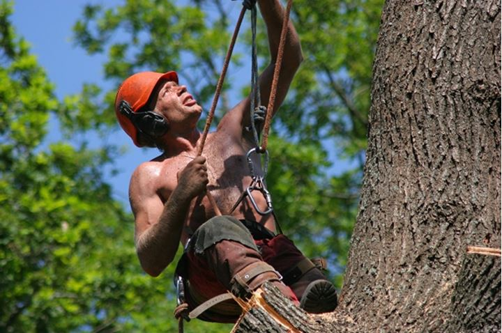 Climber hanging on a tree with rope