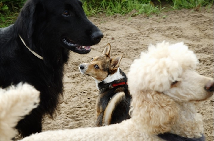 Close-up view of the faces of three dogs