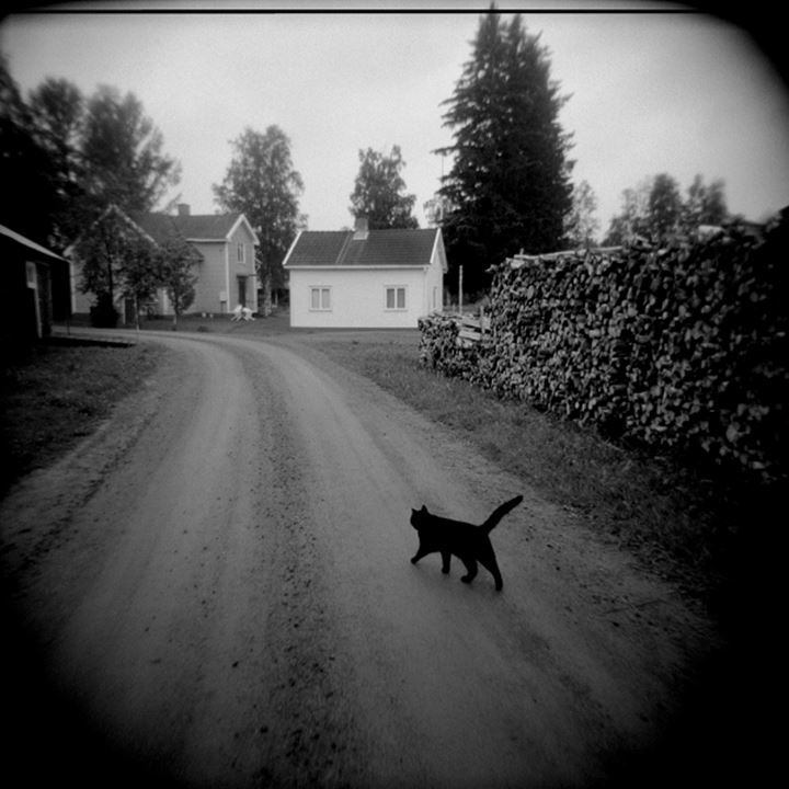Silhouette of a cat walking on the road, Boden, Sweden
