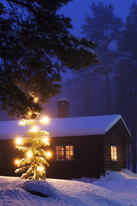 Christmastree in front of a snowcovered cottage