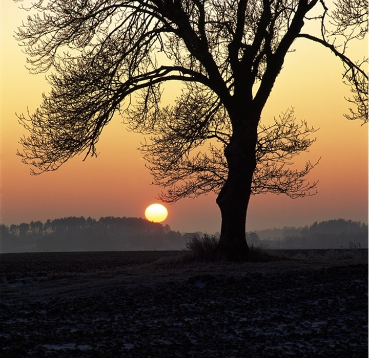 Bare trees on a landscape