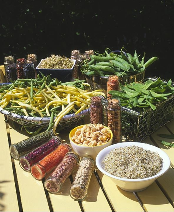 Many kinds of Vegetables outdoors