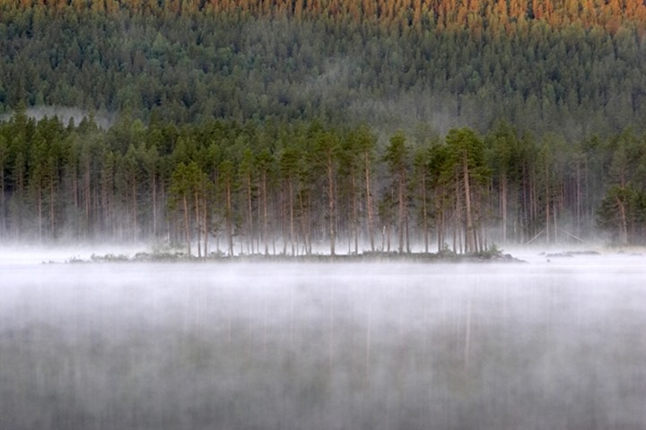 Sweden - Fog over a lake near forest