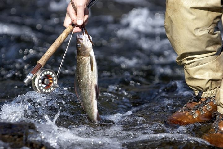 Low section view of a person holding a fishing rod and a fish