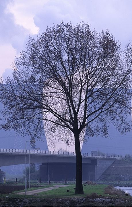 Tree by a bridge in Holland