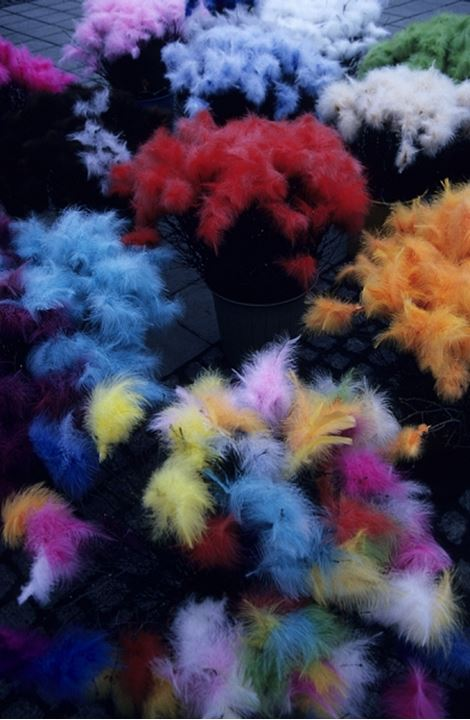 Close up of colourful feathers