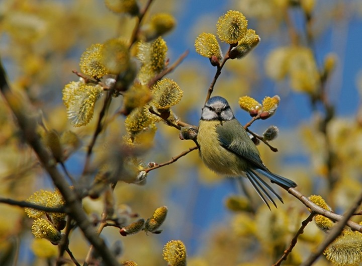Bird perching on a twig among blooming yellow flowers