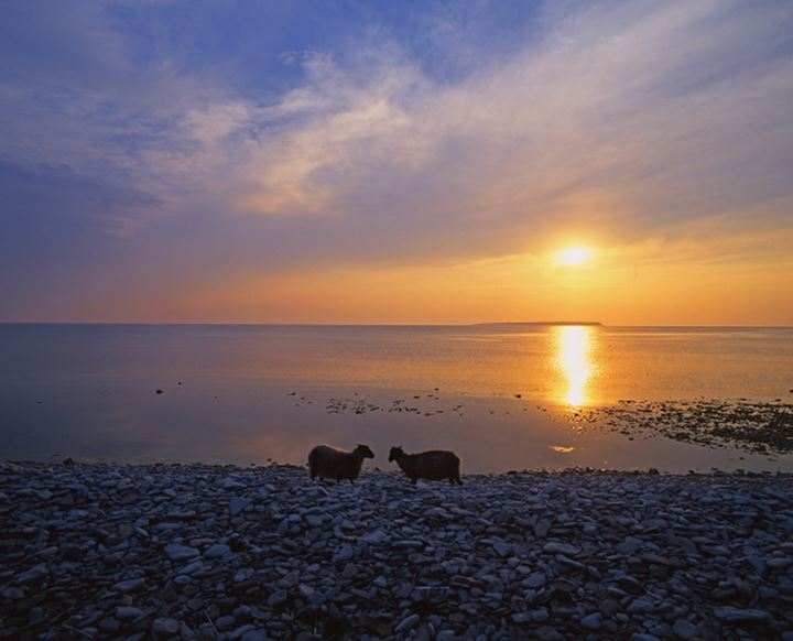 Silhouette of two sheep on the beach, Gotland, Sweden