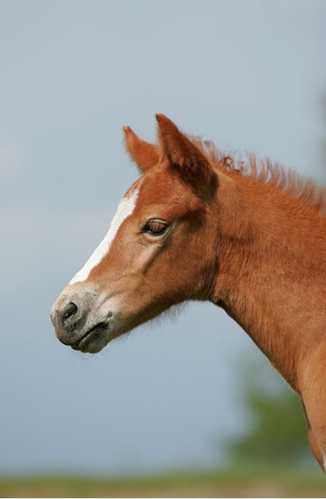 Side view of a horse face against blue sky