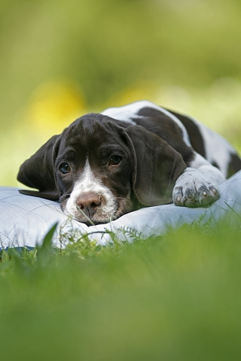 Puppy laying on a blanket