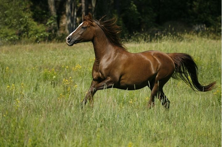 Side view of a brown horse in motion whilst running in the field, Sweden