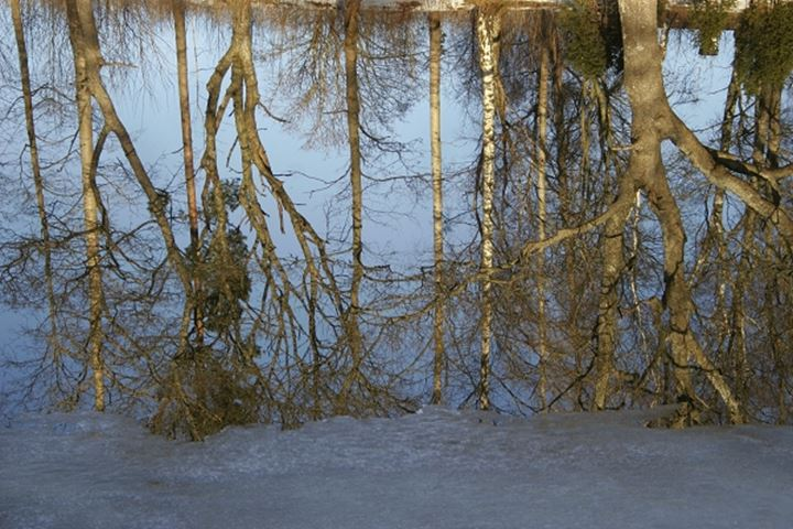 Reflection of trees in the water at wintertime, Sweden