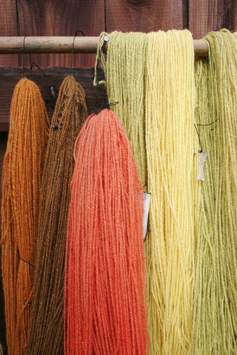 Hanks of hand dyed wool hung out to dry