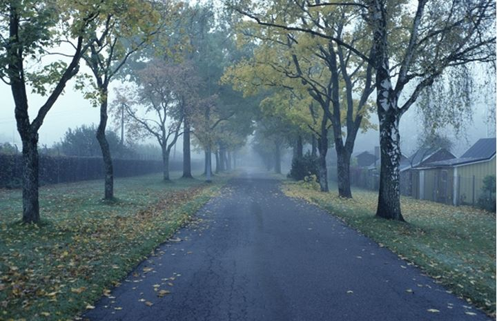 An empty road with trees in fall