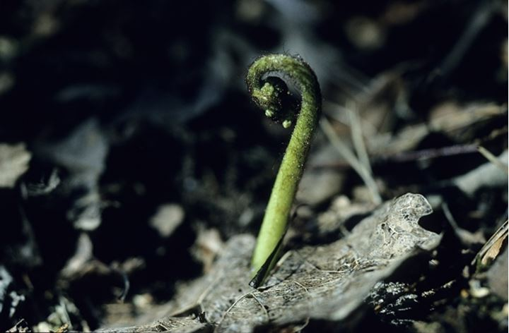 Close up view of green worm